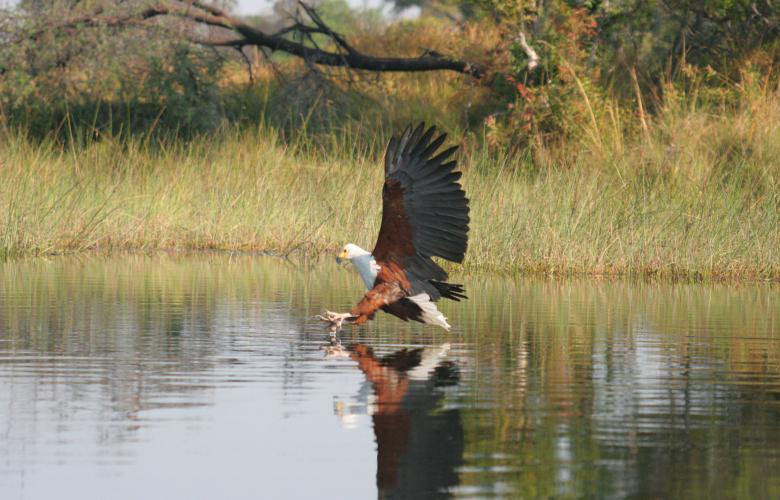 Botswana – Bird Wonderland
