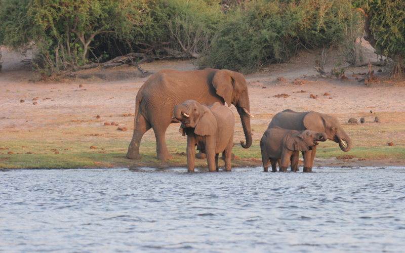 "Praises for Chobe: ""The Land of Elephants"""