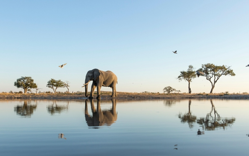 Safaris: Your Game, Your Rules – an Independent Tour of Botswana