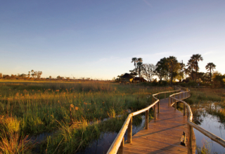 Unforgettable Destinations For Your Honeymoon – Botswana