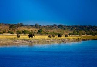 Botswana Tour with Saga