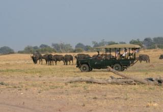 Championing the Chobe National Park