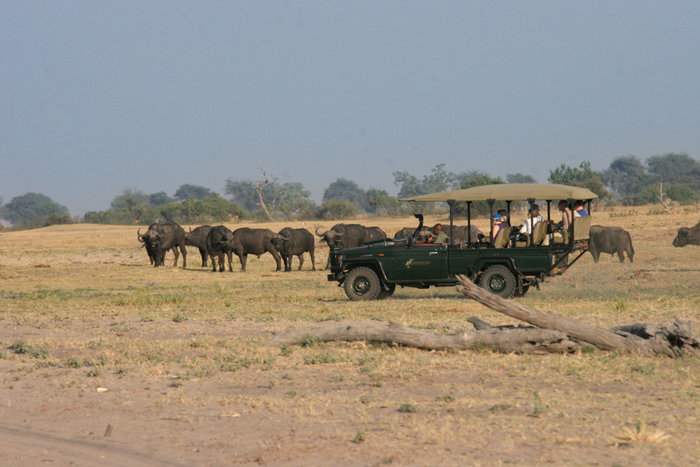 Game drive in Chobe, Botswana