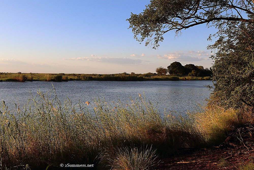 chobe-river-and-tree
