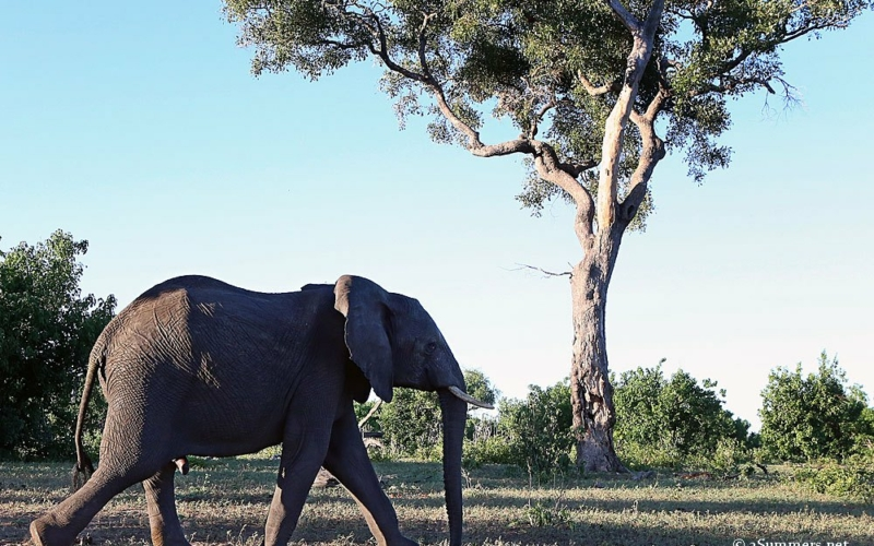 24Hours in Kasane: Monkeys, Warthogs and Elephant-eating Dogs