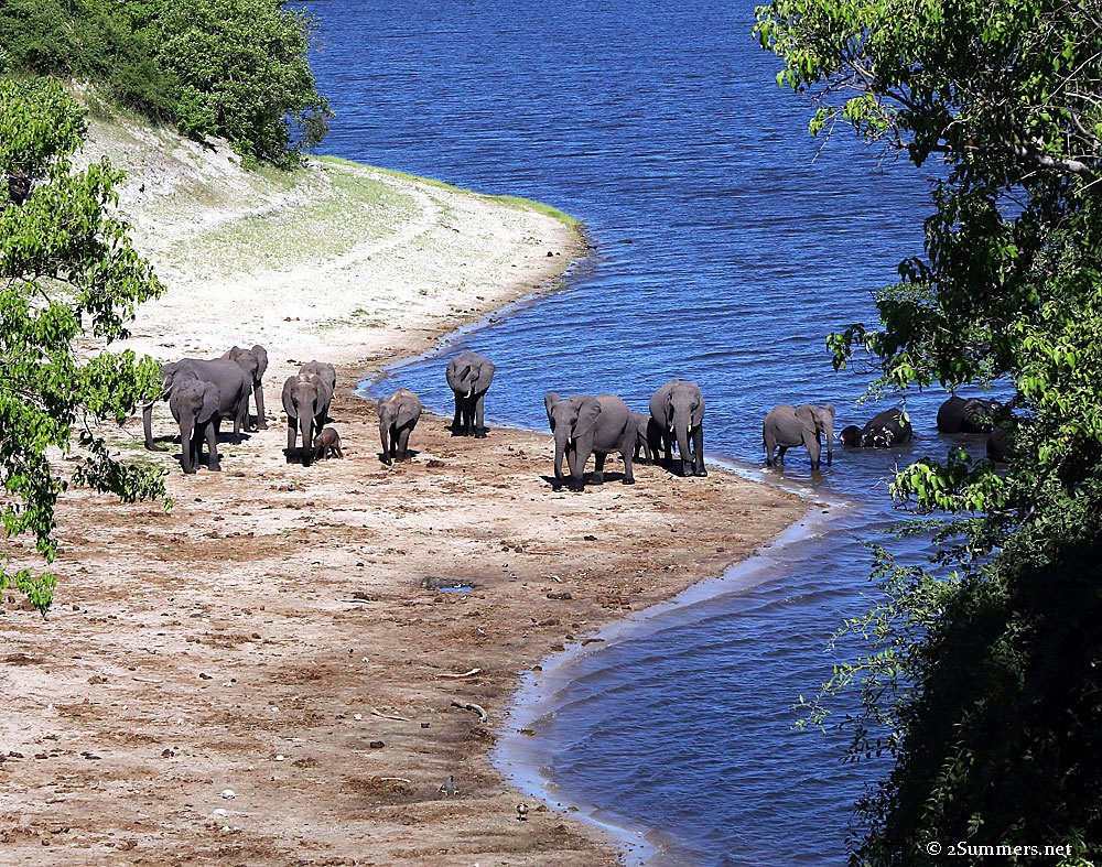 elephants-and-water-1