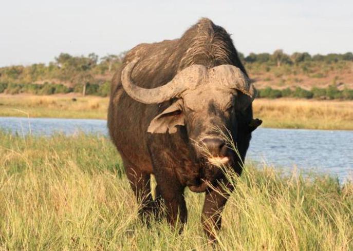Under One Botswana Sky's Photo Contest