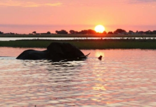 The Land of the Elephants at Chobe Safari Lodge