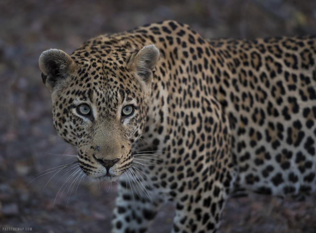 Botswana getaway