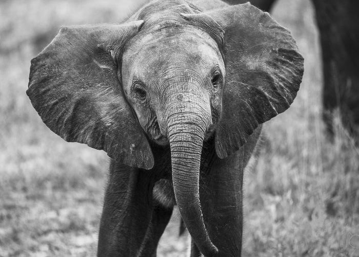 Photographer Monalisa Colditz (Photo captured on safari at Chobe Safari Lodge)