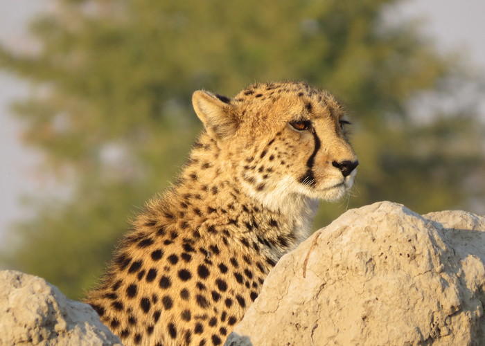 Photographer Sarah Hennessy ( Photo captured on safari at Chobe Safari Lodge )