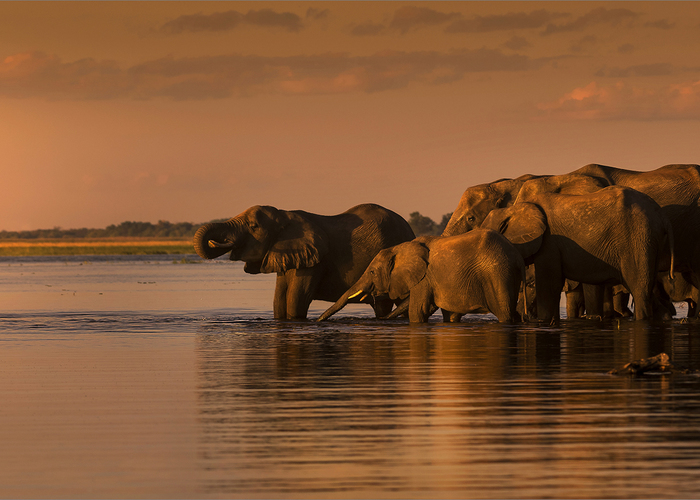 Photographer Bruna Mentrup-Nortje (Photo captured on safari at Chobe Safari Lodge)
