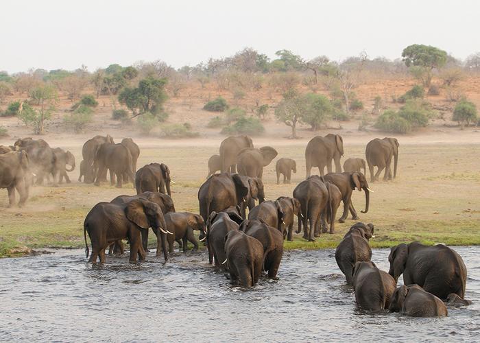 visit Botswana elephants