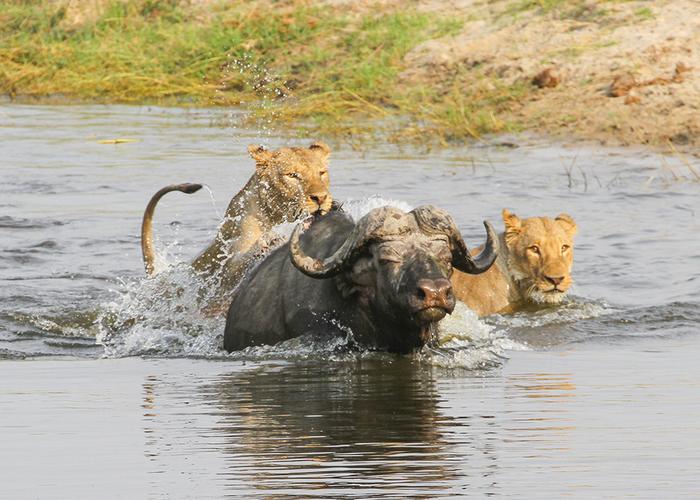visit Botswana wildlife 2