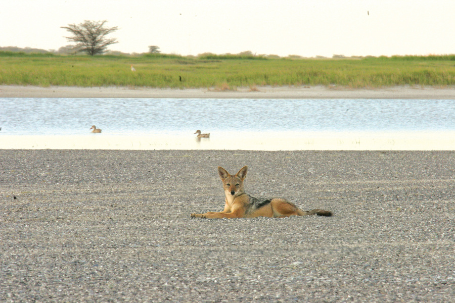 Safari Activities Makgadikgadi Salt Pans