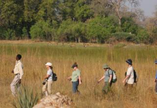 Safari Activities You Must Try While in Botswana