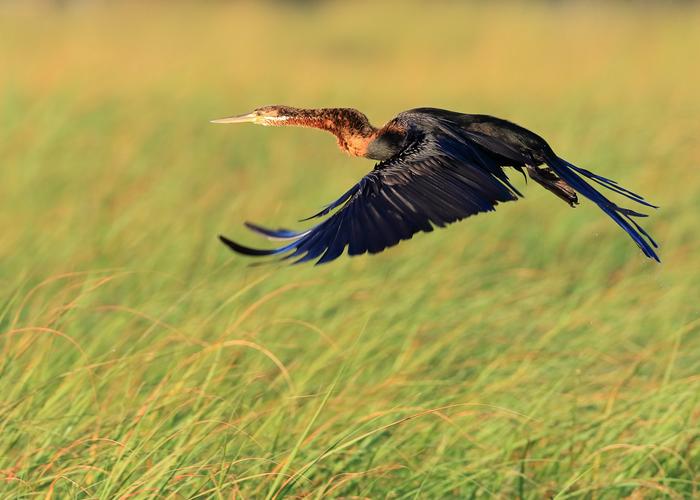 © Veeser Wolfgang Birdwatching in Botswana