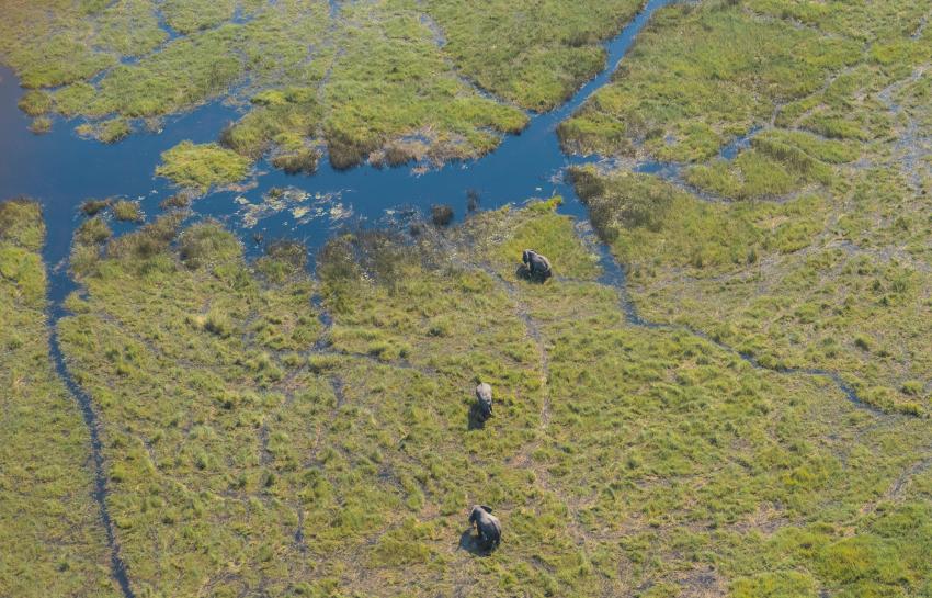 elephants, Botswana, Okavango Delta