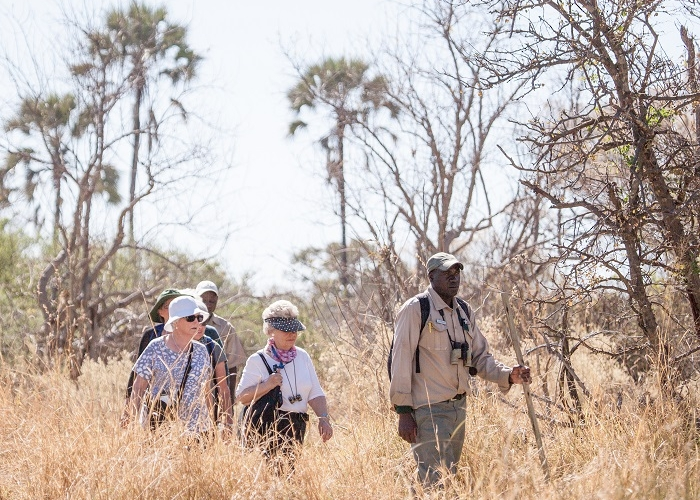 Why You Should Take a Bush Walk in Botswana