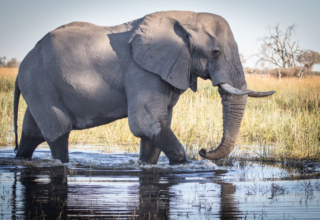 What You Can Expect on Safari in South Eastern Okavango Delta