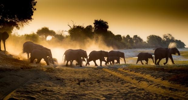 Under One Botswana Sky, Chobe Bush Lodge, Chobe Safari Lodge, Botswana, Chobe, Chobe National Park, This is Chobe, safari, wildlife, elephant, elephant conservation, Big 5