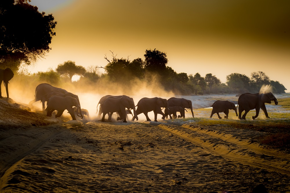 Under One Botswana Sky, Chobe Bush Lodge, Chobe Safari Lodge, Botswana, Chobe, Chobe National Park, This is Chobe, safari, wildlife, elephant, elephant conservation, Big 5