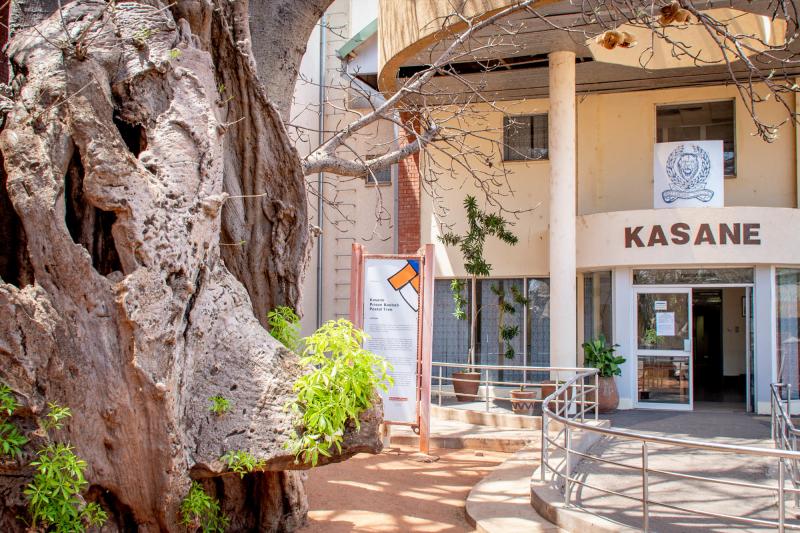 Kasane baobab