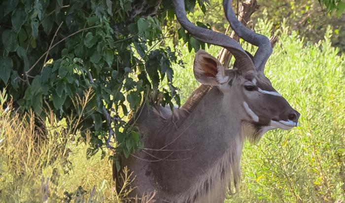 Under One Botswana Sky, Rra Dinare Camp, Dinare Camps, Okavango Delta, Botswana, Okavango Delta Safari Camp, Botswana Travel Blog, Botswana Safari