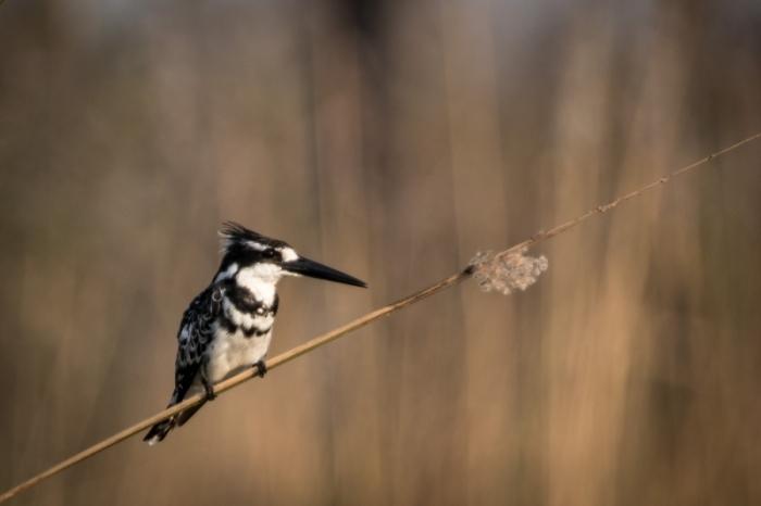 Under One Botswana Sky, Wet Season Safari, Okavango Delta, Chobe National Park, Moremi Game Reserve, Botswana Safari, Botswana Wildlife, Botswana Safari Camps, Green Season Safari