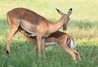 Seasonal Botswana: Green Season Safari