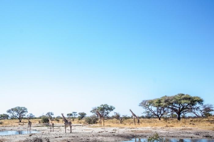 Under One Botswana Sky, Dry Season Safari, Okavango Delta, Chobe National Park, Moremi Game Reserve, Botswana Safari, Botswana Wildlife, Botswana Safari Camps
