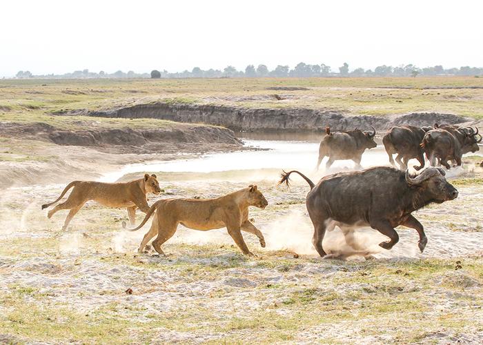Under One Botswana Sky, Botswana, Okavango Delta, Botswana Safari, Okavango Delta Safari, Botswana Low Water Levels, Botswana Dry Season, Dry Season Safari
