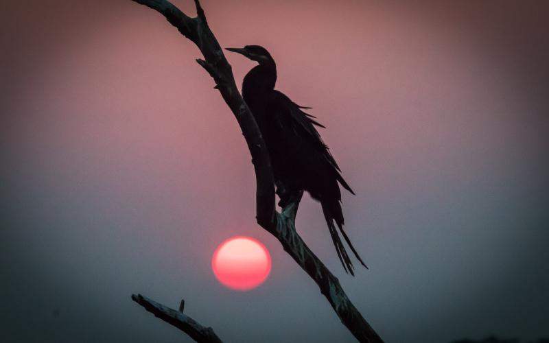 Summer Birding Safari in Chobe National Park