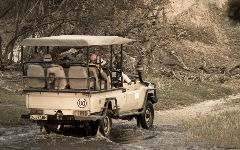 Gallivanting by Game Drive at Moremi Crossing & Gunn's Camp