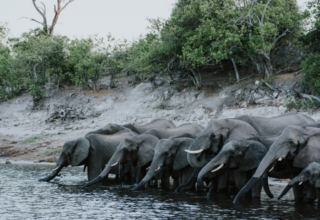 In the Press: Why the Rainy Season Is Still the Perfect Time to Visit Botswana