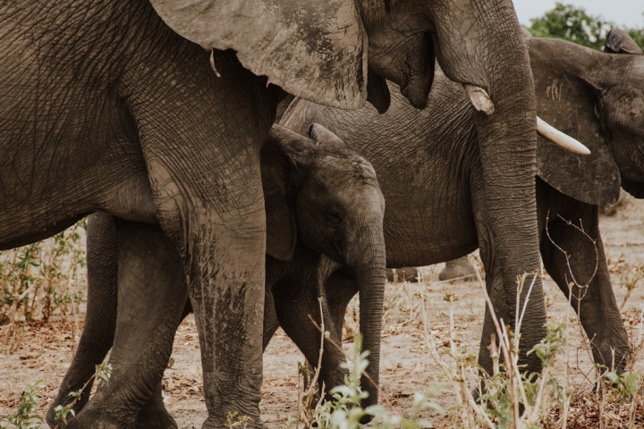 Botswana, Botswana Safari, Chobe National Park, Chobe Safari Lodge, Okavango Delta, Under One Botswana Sky, Rainy Season, Green Season