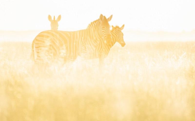 World Animal Day: Celebrating Botswana's Beasts and Birds