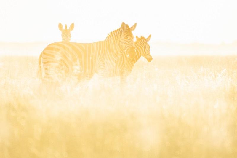 Under One Botswana Sky, World Animal Day, Botswana Safari, Okavango Delta, Botswana Wildlife
