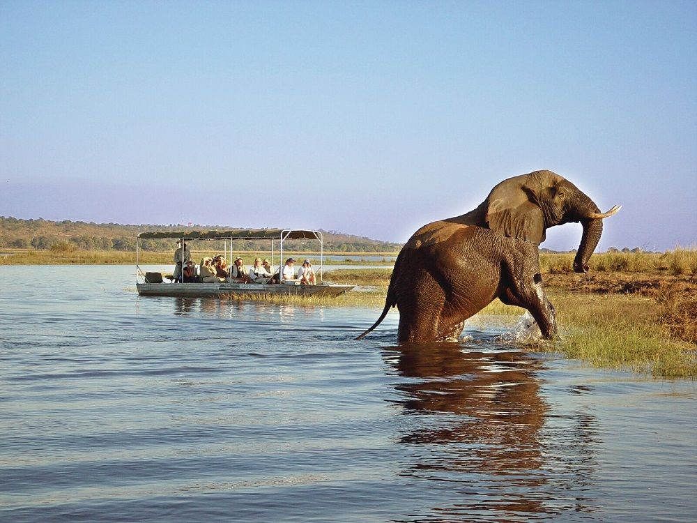 Under One Botswana Sky, Chobe National Park, Botswana Safari, Botswana Wildlife, Festive Season Safari, Family Safari
