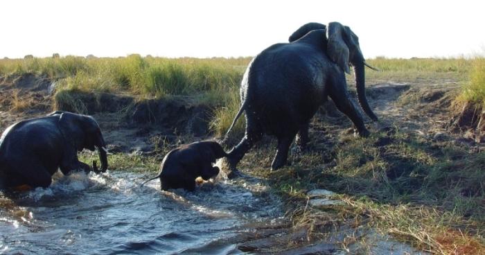 Under One Botswana Sky, Chobe National Park, Botswana Safari, Botswana Wildlife, Festive Season Safari, Family Safari