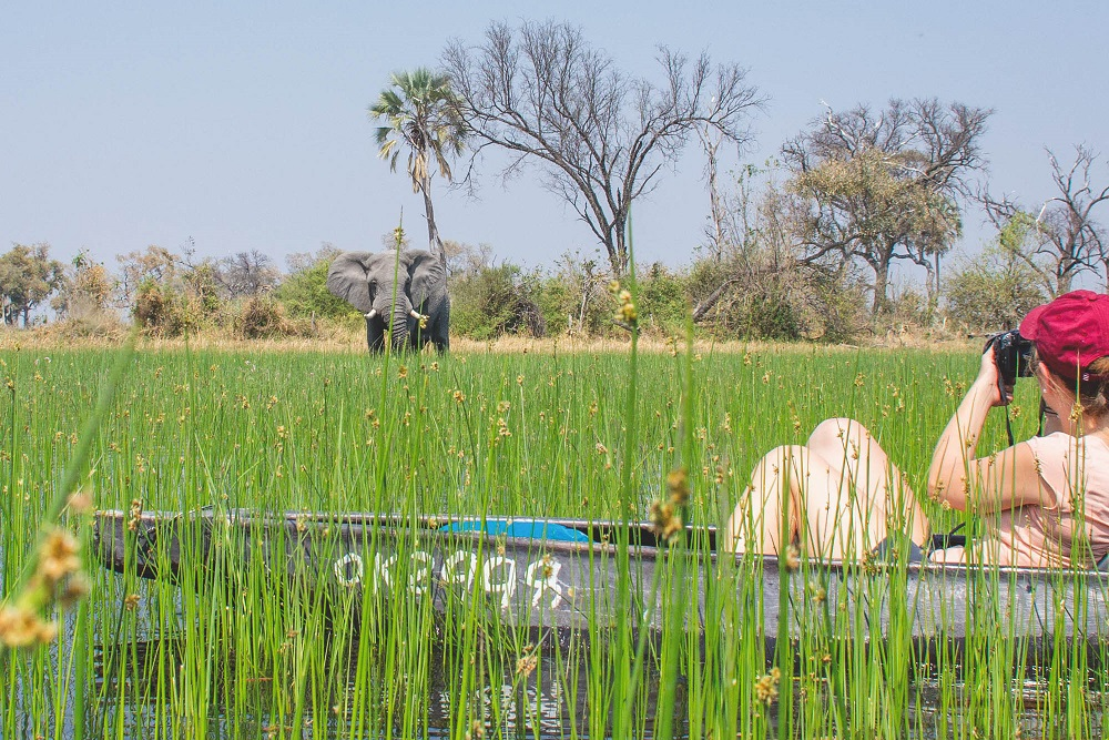 Under One Botswana Sky, Okavango Delta Safari, Botswana Safari, In the Press, Mma Dinare Camp, Moremi Crossing