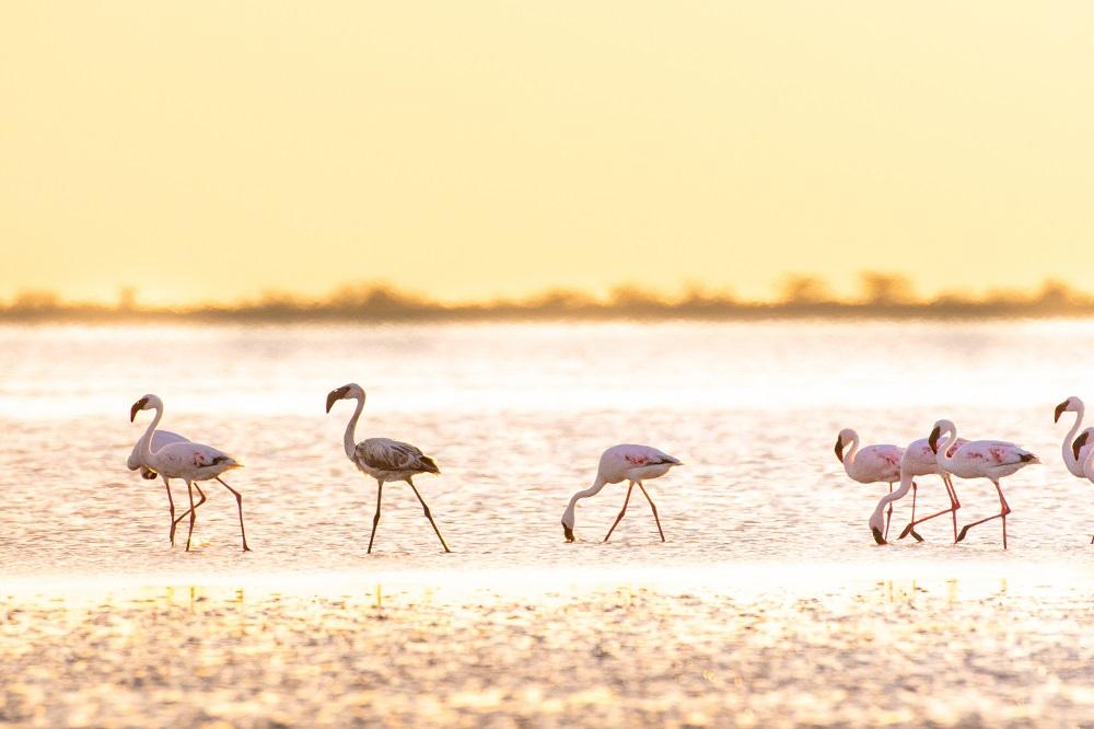 Under One Botswana Sky, Botswana, Makgadikgadi Salt Pans, Nata Bird Sanctuary, Nata Lodge