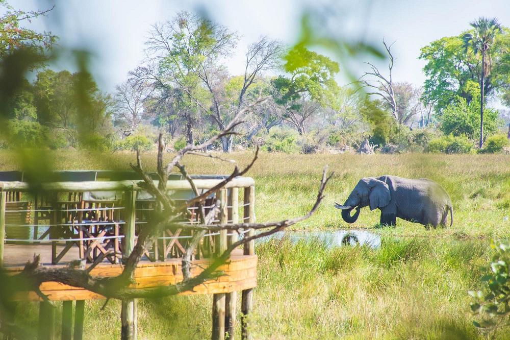 Under One Botswana Sky, Top Travel Destination, Wildlife Safari Experience, Botswana Safari, Botswana Safari Accommodation
