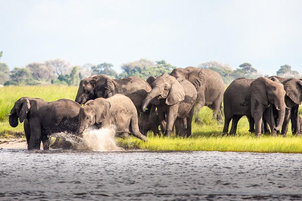 Under One Botswana Sky, Botswana Safari, Chobe River, Chobe Elephants
