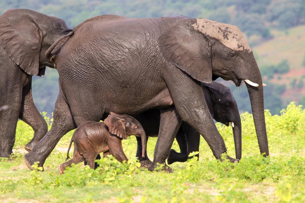 Under One Botswana Sky, Botswana Safari, Chobe National Park, Chobe Elephants