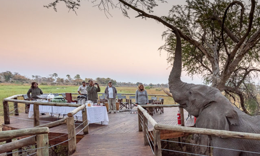 Book a Botswana Safari-1