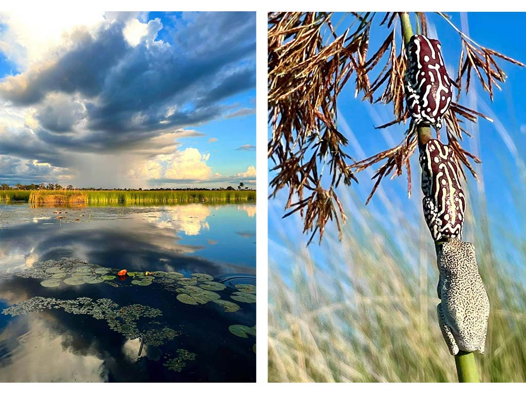 Okavango Delta - What is it like to safari rgiht now?